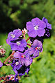 PurpleFlowerCluster.jpg