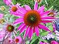 Purple flower close-up.jpg