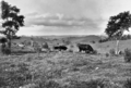 Queensland State Archives 350 Looking from Wootha towards Maleny c 1931.png