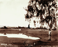 Queensland State Archives 4008 Darling Downs Chiverton near Warwick with Kirchers vineyard on the right 9 May 1894.png