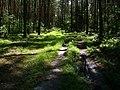 REZERWAT PRZYRODY Olbina -na skraju- 10 - panoramio.jpg