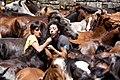 Rapa Das Bestas 2010 en el Curro de Sabucedo 04.jpg