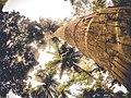 Recorrida por el Parque Nacional Natural Tayrona- 2.jpg