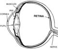 Retina (PSF).png