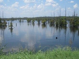 Black Lake (Louisiana) - Cypress trees dominate the waters of the lake.