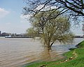 Rheinhochwasser.jpg
