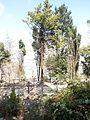 """Riserva Naturale Orientata """"Monte Bonifato"""" (Alcamo) 03.jpg"""