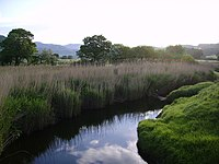 River Lickle - geograph.org.uk - 181135.jpg
