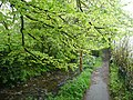 Riverside footpath, Camelford - geograph.org.uk - 1348987.jpg