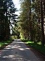 Road through Greenhill Wood - geograph.org.uk - 808630.jpg