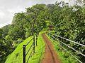 Road to green Heaven.jpg