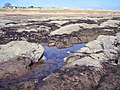 Rock pools at East Haven - geograph.org.uk - 445396.jpg