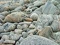 Rocks on Bagh Dhail Mòr - geograph.org.uk - 750484.jpg