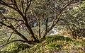 Rogue River & Rainie Falls Trail (34869011251).jpg