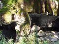 Rokytnice v Orlických horách, Panské Pole, R-S 70 (rok 2010; 12).jpg