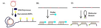 Rolling circle replication - The detection methods of RCA product