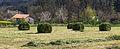Rolos de herba en Valverde.jpg