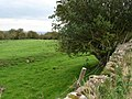 Roman ditch above Walwick - geograph.org.uk - 244743.jpg