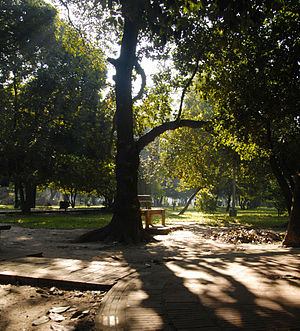 Ramna Park - Large old trees of Ramna Park.