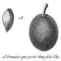 Rozier - Cours d'agriculture, tome 8, pl. 34, prunier qui porte deux fois.png