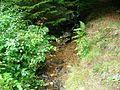 Ruisseau (8).jpg