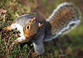 SQUIRREL!! (4149425032).jpg