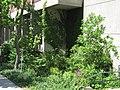 SUNY-ESF-rain-garden-2014.jpg