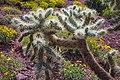 Saguaro Nat. Park (15985653388).jpg