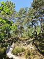 Saint-Pierre-lès-Nemours (77), le Mont Sarrasin par le GR 13, sens est-ouest 12.JPG