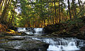 Salt Springs State Park Trough.jpg