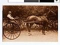Sam Schwartz, a horse trader in Minneapolis (4418722643).jpg