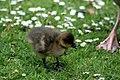 Sandringham 23-05-2011 (5761325340).jpg