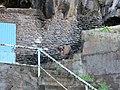 Santa Cruz - Madeira, 2012-10-24 (18).jpg