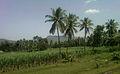 Scenic view at Elamanchali in Visakhapatnam district.jpg