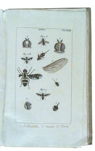 Johann Rudolph Schellenberg - J.R. Schellenberg Gattungen der Fliegen