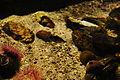 Sea Life Centre, Blackpool (5592).jpg