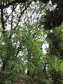 Senigallia LeGrazie Cerro 2.jpg