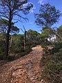Sentier domaine Valcolombe 1.jpg