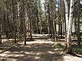 Sentier du Jardins O'Colibris - panoramio.jpg
