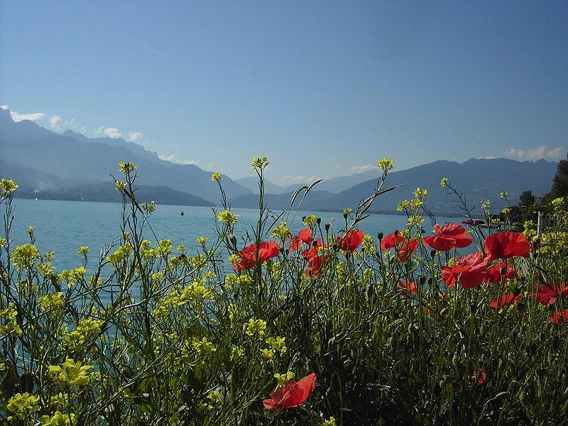 Sevrier wild Flowers
