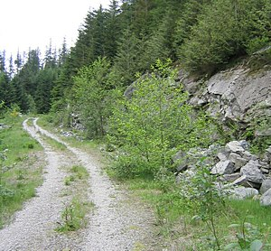 Single track (mountain biking) - An example of doubletrack.