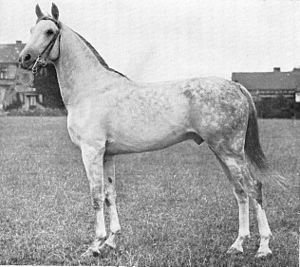 Arabian Horse Images Shahzada (horse race) ...