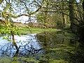 Shallow pool beside Bedford Gorse - geograph.org.uk - 1820809.jpg