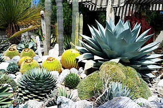 Sherman Library and Gardens - Cactus and succulent garden