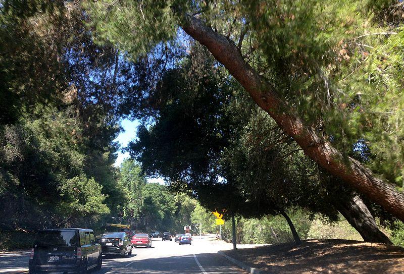 File:Sherman Oaks, Los Angeles, CA, USA - panoramio (219).jpg