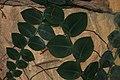Shingle Plant.JPG