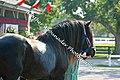Shire Horse (2690237151).jpg