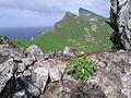Nihoa Island Hawaii