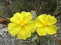 Sierra de Almijara (9085362139).jpg