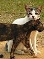 Singapore wild cats 1.jpg